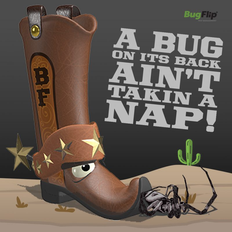bugflip-boot-spider